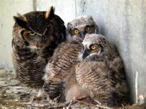 amazon black friday 2017 uk owls 3 060906 171 why evolution is true