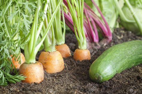 How To Grow An Organic Vegetable Garden Garden Landscap How To Grow An Organic Vegetable Garden