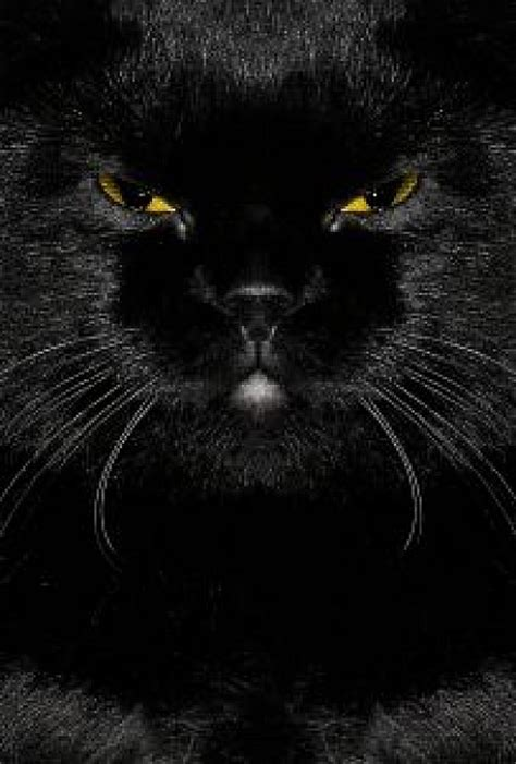 Caterpillar Ct11248 Free Box Yellow Black black cat with angry and yellow photo free