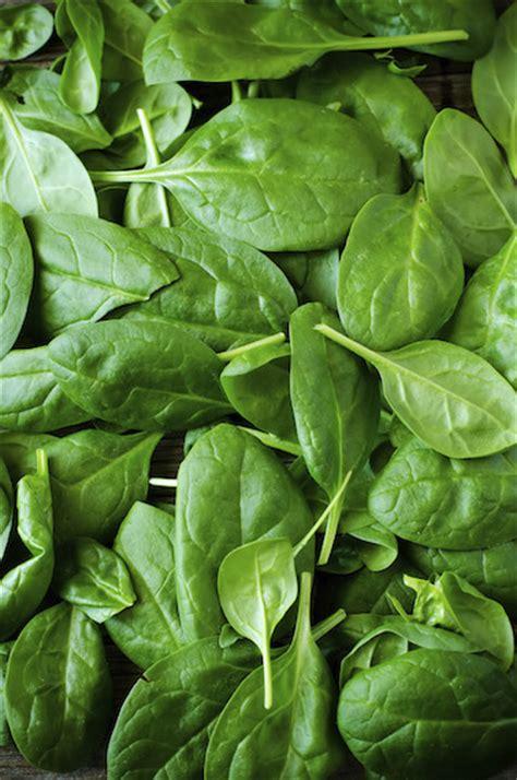 cucinare gli spinaci freschi cucinare gli spinaci