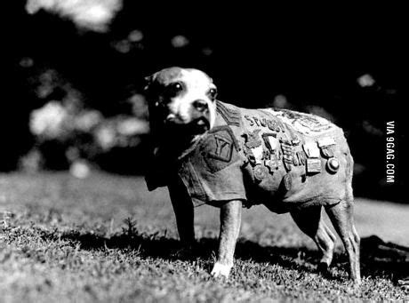 Sgt Stubby Most Decorated War 48 Best Images About Doggies