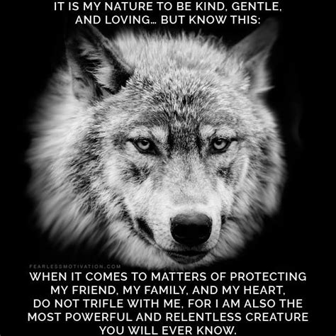 Madonna Is Not A Friend To The Sheep by 20 Strong Wolf Quotes To You Up Wolves Wolfpack