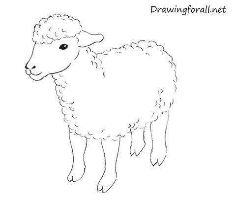 how to a sheep how to draw a sheep for drawingforall net