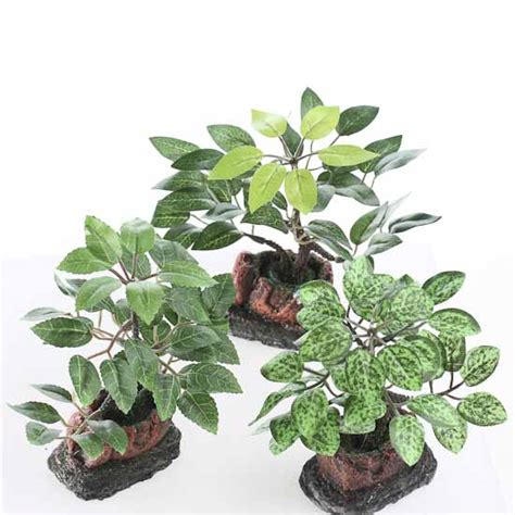 mini potted plants assorted miniature potted plants set of 6 fairy garden