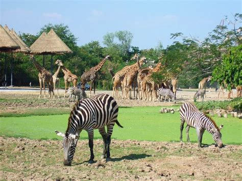 best safari park bangkok safari world and marine park review thai travel tips