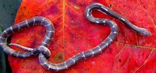 film ular cobra india tips menangani ular home7ech s islami blogs