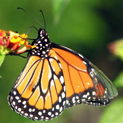 imagenes sobre mariposas quien mira hacia afuera sue 241 a quien mira hacia adentro