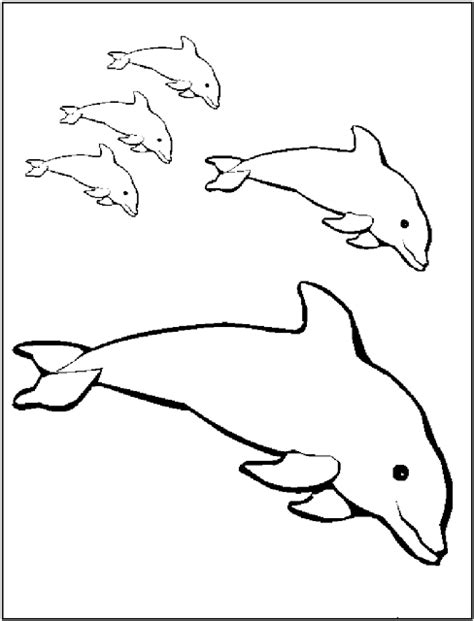 coloring pages of dolphins printable free printable dolphin coloring pages for kids