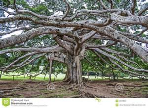 sri lanka botanischer garten botanischer garten peradeniya kandy stockfoto bild