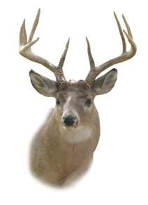 Deer Head Deer Head Outline Cliparts Co