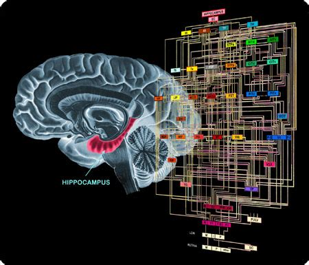 brain computer interfaces handbook technological and theoretical advances books mind world cach