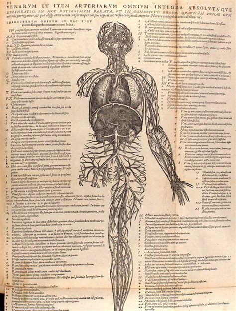 anatomy of a song the history of 45 iconic hits that changed rock r b and pop books 24 best vesalius images on andreas vesalius