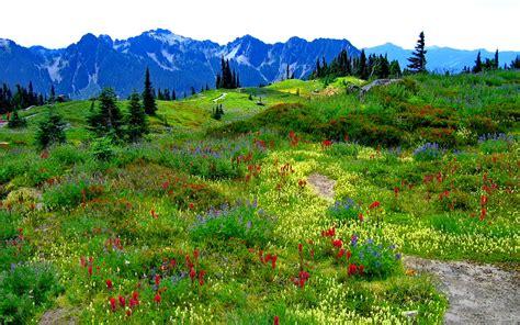 green mountain meadow  flowers  multiple colors