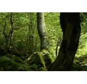 Imagenes De Animales La Selva