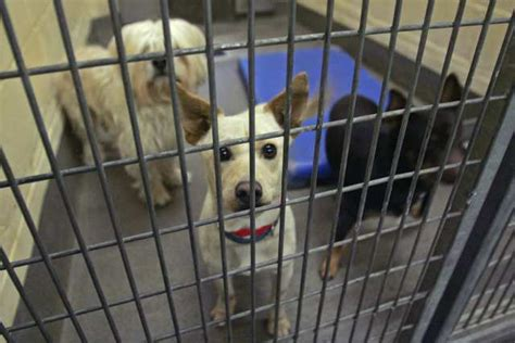 la shelter workshops to explore quot no kill quot policy at l a animal shelters l a unleashed los