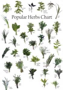 list of 1 000 herbs against cancer secretly healthy