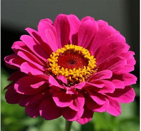 summer flower pink summer flowers