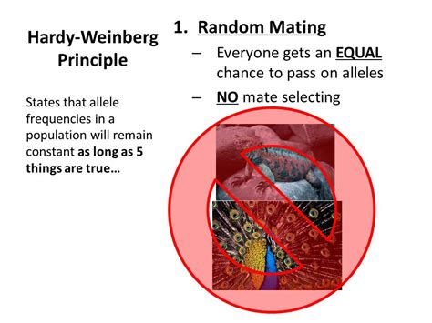 hardy weinberg principle evolution as genetic change ppt video online download