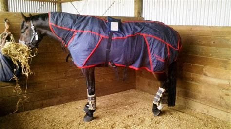magnetic rug for horses magnetic rug rugs ideas
