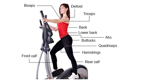 best cardio machines at the to lose weight workout