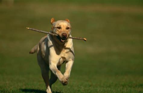 puppy fetch can fetch kill your