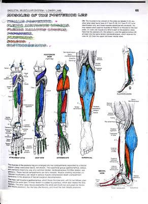 anatomy colouring book book depository anatomy coloring book pages your