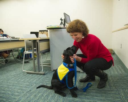 golden retriever puppies corpus christi tx student with fur learns the ropes in tamu cc classroom a m corpus