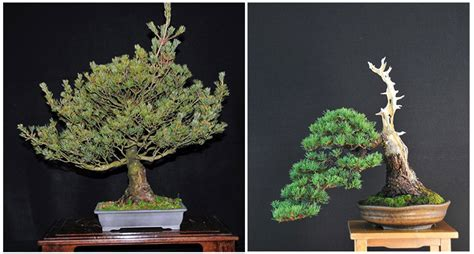descargar bonsai masterclass all you need to know about creating bonsai from one of the worlds top experts libro e before after bonsai with at least five names bonsai bark