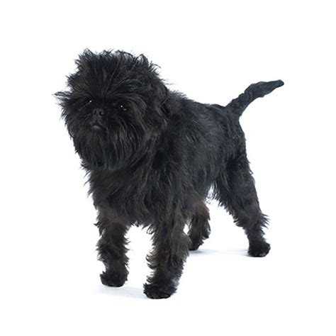 black and brown breeds breed large black and brown breed dogs spinningpetsyarn
