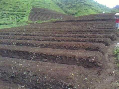Pupuk Dolomit Untuk Tanah Gambut teknis budidaya tanaman sawi kebun organik