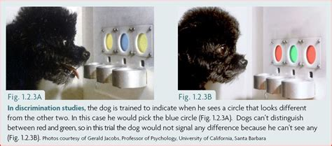 how do dogs see color can dogs see color and how do we dr yin