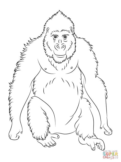 cute gorilla coloring page cute gorilla coloring pages animal pictures of