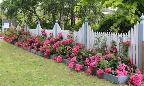 Flower Gardens Along Fences Pictures To Pin On Pinterest Flower Garden Fence