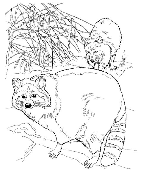 printable coloring pages free printable raccoon coloring pages for kids