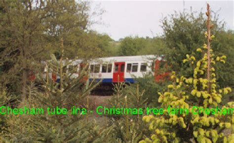 christmas tree farm chesham london christmas trees uk