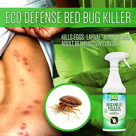 the best bed bug spray best bed bug spray 2017 reviews and insider tips