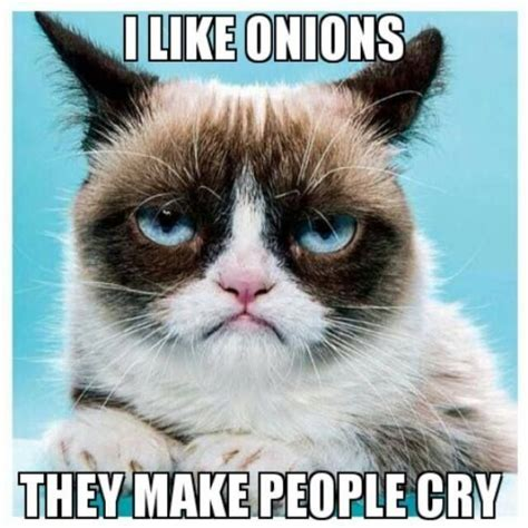 grumpy quotes top 40 grumpy cat pictures and quotes quotes