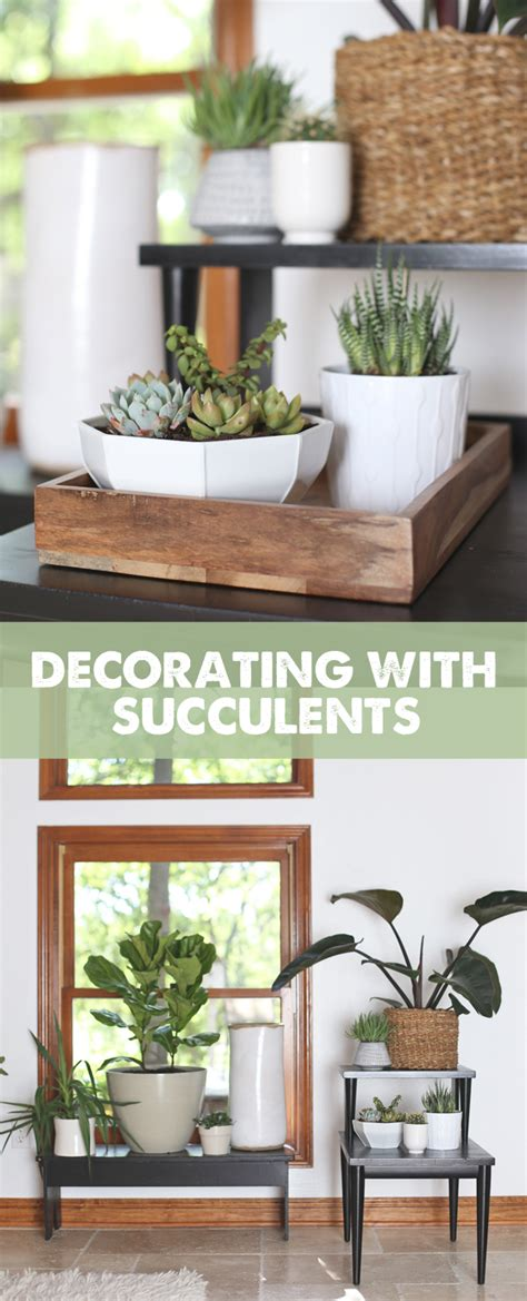 decorating with succulents three trends to try along with