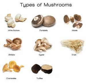 incredible health benefits of mushrooms urbanwired