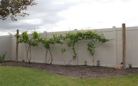 backyard vines hettinger us decorative grapevine trellis garden