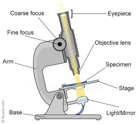 diagram of electron microscope light microscope vs electron microscope a detailed