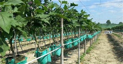 Tanaman Gantung fertigasi gantung anim agro technology the knownledge