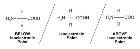protein zwitterion isoelectric point