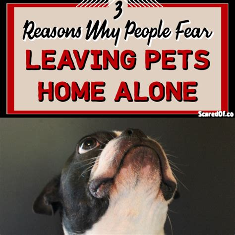 3 reasons for fear of leaving pets home alone scared of