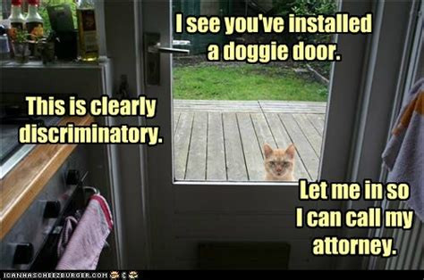 hilarious hoa stories fun fridays doggie door discrimination florida