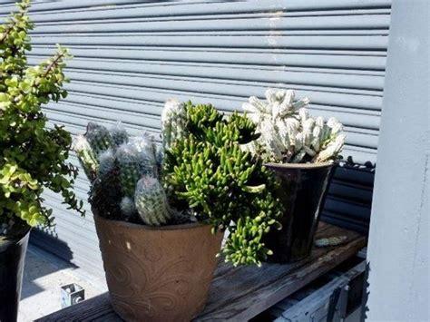 vendita online piante vendita piante grasse le piante grasse vendita piante