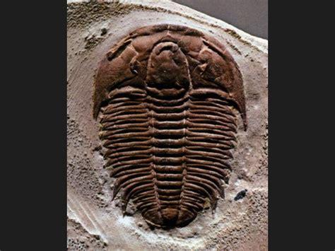 imagenes de fosiles maloka fosiles
