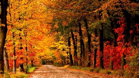 country road autumn 947342 wallpapers13 com