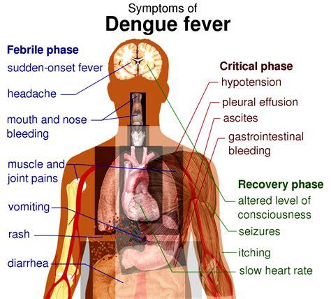 fever symptoms beware of dengue fever outbreak in travel information for from