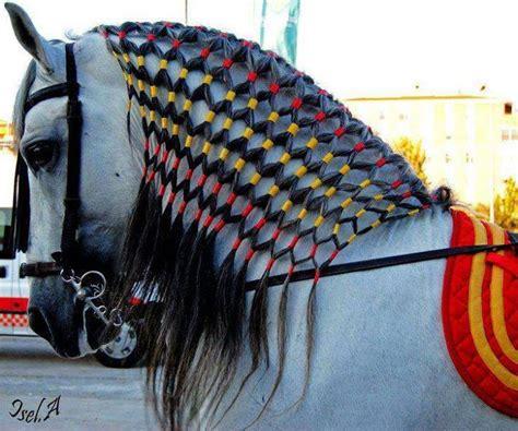 barrel racing horse hair braids caballo pura sangre con su trenza maya ranchero y gallardo